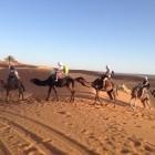 Camel trekking Toursamarruecos