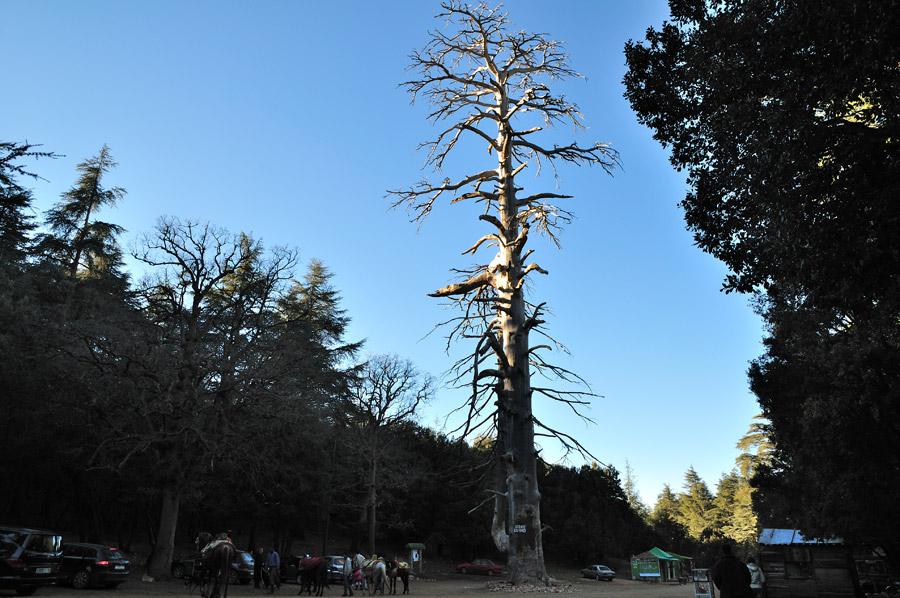 azrou-bosque-cedros toursamarruecos